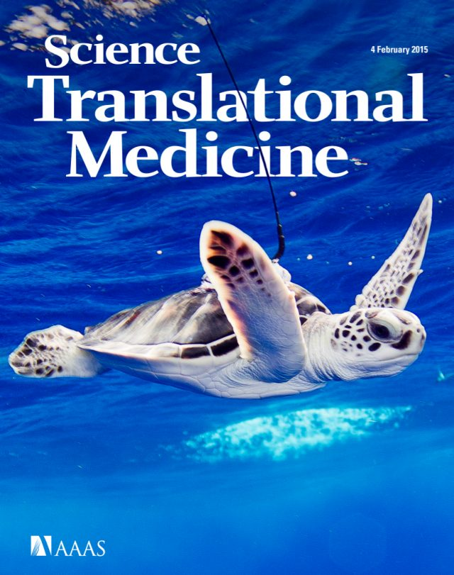 Biasco L, Scala S et al. In vivo tracking of T cells in humans unveils decade-long survival and activity of genetically modified T memory stem cells, Science Trans Med 2015 (Cover Story)